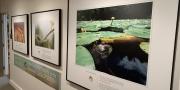 Canadian Wildlife Photography of the Year